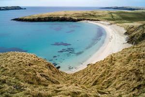 Robben am Strand der Shetlandinseln foto