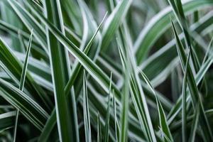 Nahaufnahme von langen Stielen von grünem Gras im Frühlingsgarten foto