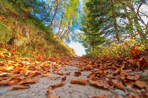 Bergweg mit schönen Herbstfarben zwischen den Blättern foto