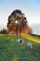 Pferdemutter mit ihrem kleinen Bauernhof bei Sonnenuntergang foto