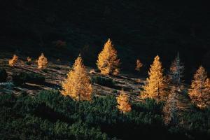 klare dunkle Sonne zwischen Lärchen und Kiefern im Herbst foto