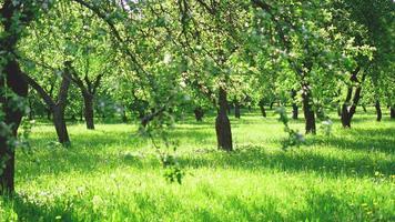 schöner Frühlingspark - leuchtend grüne Farben foto
