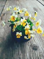 Gelbe Violablumen in blauer Keramikschale, auf Holzveranda-Hintergrund. Stillleben im rustikalen Stil. Nahaufnahme. Sommer oder Frühling im Garten, Landschaftslebensstilkonzept. vertikales Bild foto