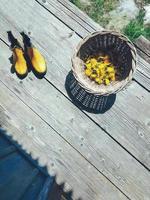Gelbe frische Löwenzahnblütenköpfe in Korbschale, Gummistiefel für Gartenarbeit auf Holzveranda-Hintergrund. Stillleben im rustikalen Stil. Tageslicht, harte Schatten. Landschaftslebensstilkonzept foto