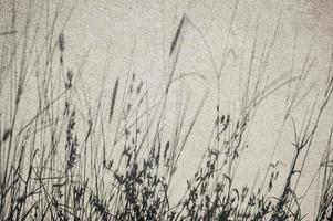 Betonoberfläche mit Grasschatten foto