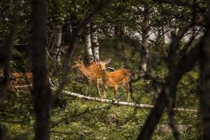 die schöne Bergwaldlandschaft foto