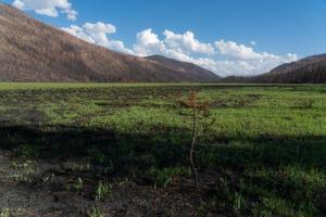 Waldbrandschäden in der Wildnis von Colorado foto