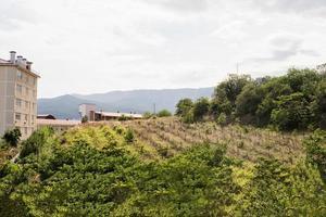 alte weinberglandschaft auf der krim foto
