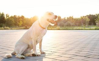 süßer einsamer Mischlingshund, der bei Sonnenuntergang im Park sitzt foto