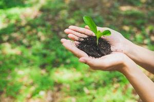 Konzept des Weltumwelttages. Hand, die Pflanze hält. foto