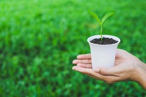 Konzept des Weltumwelttages. Hand, die Pflanze im Topf hält. foto