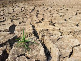 grünes Gras auf rissiger Erde im Sommer foto
