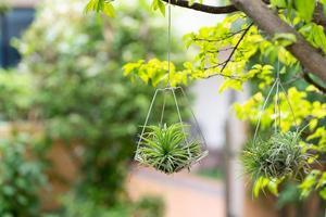 kleine Luftpflanzen hängen am Baum foto