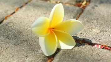 Blumen, die von Bäumen fallen und auf der Straße verstreuen foto