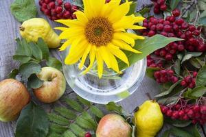 floraler Hintergrund. Sonnenblumenblume in einer Glasvase, Früchte foto