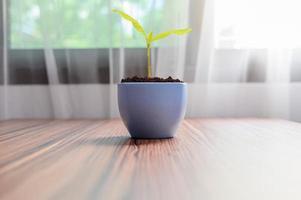 Bäume wachsen in Töpfen. Pflanzen lieben. foto