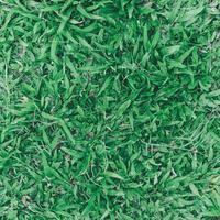 Draufsicht auf grünes Gras und Grasboden und Rasenfläche foto