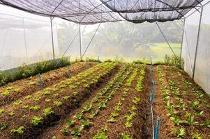 Bio-Gemüsefarm von Bauern gibt es viele Gemüsesorten foto