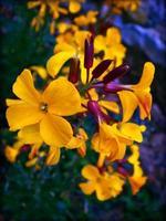 Blumenblüte Nahaufnahme Natur Hintergrund foto
