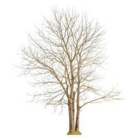 eine trockene Baumform und ein trockener Zweig auf weißem Hintergrund zum Isolieren. foto