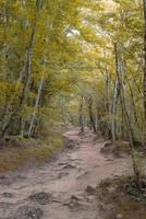gelber Herbstwald voller Bäume foto