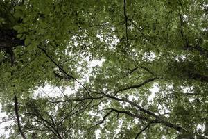 grüner Wald voller Bäume foto