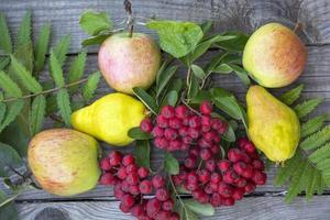 Stillleben mit Äpfeln, Birnen und roter Vogelbeere foto