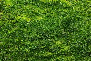 grüner Mooshintergrund, moosige Textur foto
