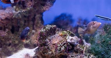 Unterwasserbild von Meerespflanzen und Algen im Meer foto