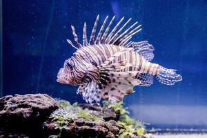 Unterwasserbild von Fischen im Meer foto
