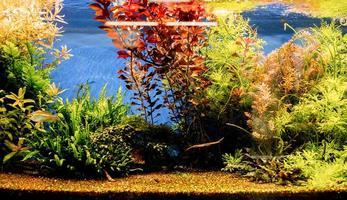 Aquarien mit Fischen im Ozeanarium foto