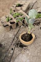 Verpflanzen von Prozessanlagen hautnah foto