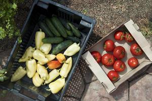 Draufsicht frisches Gemüse aus dem Gewächshaus foto