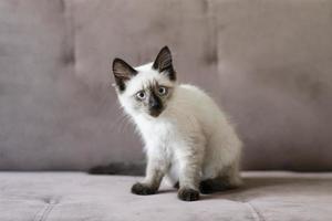 süße katze, die zu hause genießt foto