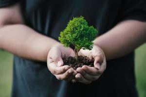 csr-konzept und geschäftspflanzen von baumsetzlingen foto