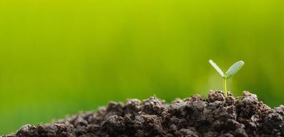 Bäume pflanzen, um im Boden zu wachsen foto