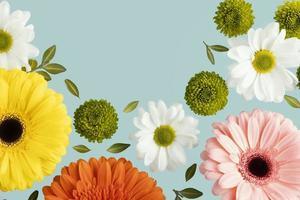 flache Lay-Frühlingsgänseblümchen-Gerbera. Auflösung und hochwertiges schönes Foto