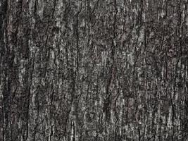 dunkle Holzstruktur im Garten foto