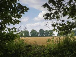 Blick über ein goldenes Weizenfeld in North Yorkshire, England? foto