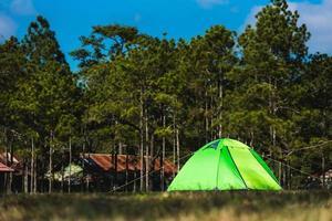 Touristenzeltcamping in der Nähe des Pinienwaldes foto
