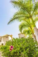 Palmen Kokospalmen und Resorts Kanarische spanische Insel Teneriffa Afrika. foto