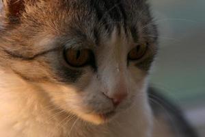 Katze wartet auf den richtigen Zeitpunkt, um die Beute anzugreifen. foto