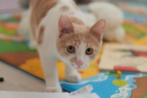 Junior-Kätzchen in roter und weißer Farbe. junges süßes kleines Ingwerkätzchen foto
