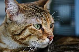 schöne Katze auf blauem Hintergrund sieht sich um foto