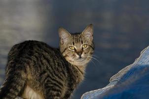 Kostenlose süße Katzen, die auf der Straße leben foto