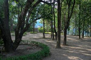 grüne Waldumgebung foto