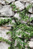 Textur von der alten Burgsteinmauer foto