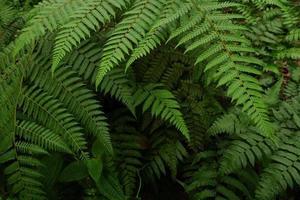 Nahaufnahme Hintergrundtextur von Wildpflanzen oder Farnen foto