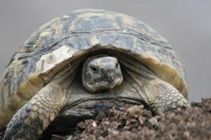 eine Schildkröte in der Stadt foto