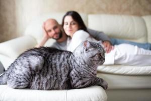 Katze liegt im Vordergrund. im Hintergrund sehen wir seine Besitzer foto